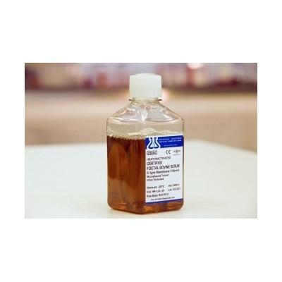 Certified Fetal Bovine Serum Heat Inactivated - Certyfikowana płodowa surowica bydlęca (FBS) inaktywowana termicznie