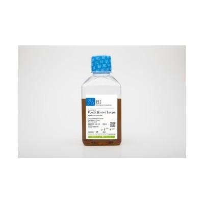 Certified Foetal Bovine Serum (FBS) Qualified for Mesenchymal Cells - FBS do hodowli komórek mezenchymalnych